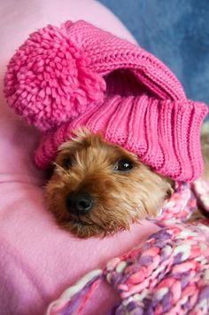 Protegido del frío.