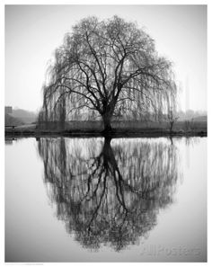 weeping willow - tattoo inspiration | Weeping willow ...Weeping Willow Black And White Tattoo