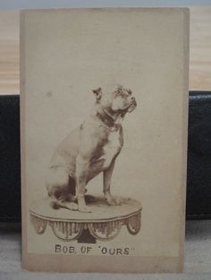 "ANTIQUE EARLY AMERICAN PIT BULL DOG ""BOB OF OURS"" RARE CIVIL WAR ERA CDV PHOTO"