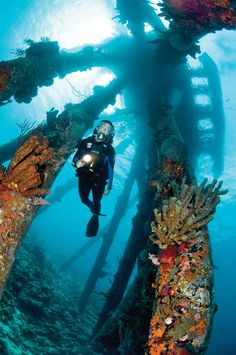 The winners of Scuba Diving's Top 100 Readers Choice Awards for Best Shore Diving in the Caribbean and Atlantic, North America, and Pacific and Indian Oceans.