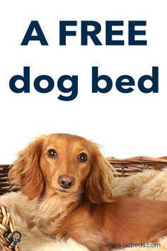 Learn what all goes into a good dog bed in order to combine comfort and value (and avoid probmls with smells or even sickness) and enter the context to win one for free Cute Dog Beds, Pet Beds, Cute Dogs, Largest Great Dane, Personalized Dog Beds, Indestructable Dog Bed, Dog Rooms, Large Animals, Dog Show