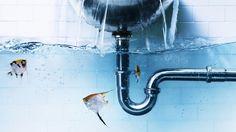 creative water art fish wallpaper hd download