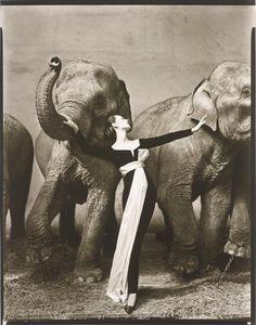 Christian Dior - Dovima with Elephants, Evening Dress by Dior, Cirque d'Hiver, Paris, August, 1955