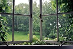 Vines around an old ajar window getty images