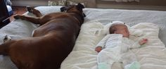19 Little Babies And Their Big Ol' Lovable Dog Friends