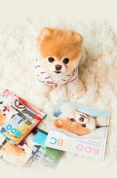 I love dogs ♥♥♥♥♥♥♥♥