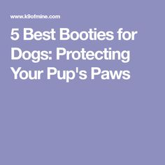 5 Best Booties for Dogs: Protecting Your Pup's Paws