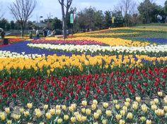 木曽三川公園センター|観光スポット|ぎふの旅ガイド