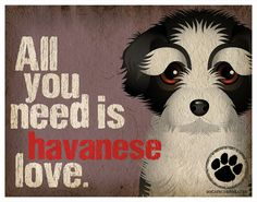 Havanese Art Print All You Need is Havanese by DogsIncorporated, $29.00