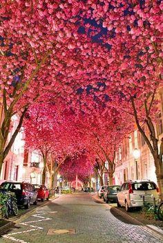 Germany's Cherry Blossom Season Totally Beats Yours