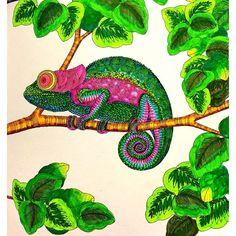 Latest Picture MillieMarotta AnimalKingdom Colouring Bigkid Colouringiscool Colouringbookforadults Shimmerpens Nofilter