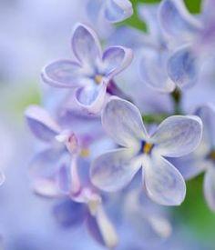 Ob Sonne, Schatten, trockener oder feuchter Boden ➥ Hier findest du tolle Beetideen für einen blühenden Garten - mit ausführlichen Pflanzplänen und...