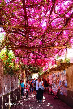 "Positano, Italia - the ""trash"" on the walls is rather distracting but the flowers on the arbor are lovely."