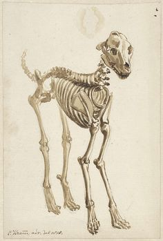 Het skelet van een hond, schuin van voren | 1818 | Rijksmuseum | Public Domain Marked European Union Members, Just For Fun, Mans Best Friend, Anatomy, Sculptures, Dogs, Artwork, Painting, Dibujo