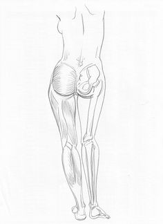anatomy figure drawing pencil on paper