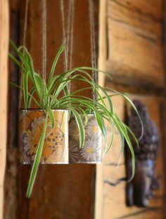 MuddHutt Design Blog: Today I Love: House Plants
