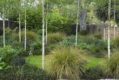 Image result for small garden landscaping design with silver birch and grasses