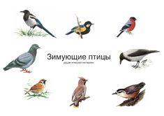 Проект «Зимующие птицы» знакомит детей с видами птиц, зимующих на просторах нашей Родины.
