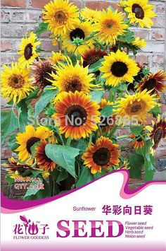 Blending sunflower seeds, Helianthus annuus,fast growing 20 Seed particles-in Bonsai from Home & Garden on Aliexpress.com | Alibaba Group