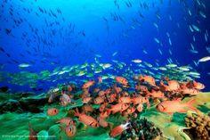 サンゴ礁、漁業管理が保全に効果 豪など研究チーム発表 - 静岡新聞 #新聞 #サンゴ礁