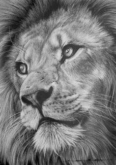 Dessin, lion, Afrique du Sud
