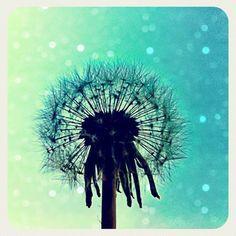Dandelion by *Nitr0glycerin