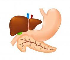 Zánět slinivky břišní neboli pankreatitida je onemocnění, které může mít ve svém akutním stavu velmi těžký průběh. Slinivka břišní (pankreas) je žláza, která se svou funkcí řadí k trávicímu systému. Enzymy, které jsou slinivkou produkovány, napomáhají trávení, zároveň se pankreas významně podílí na metabolismu cukrů.  Jedná se tak o žlázu, která má dvě strukturně odlišné části. Liší se i funkčně, jsou však těsně spojené a jedna obklopuje druhou. Liver Anatomy, Nordic Interior, Health, Science, Medicine, Tela, Anatomy, Health Care, Salud