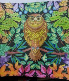 ..owl.. #secret garden