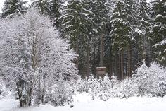 Traumhaft! Winter im Revier. 6.1.2015 Kobernauserwald