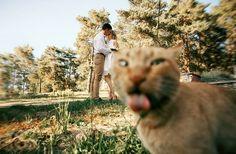 20 vezes em que gatos estragaram fotos que seriam perfeitas