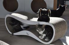 http://bliss.natemat.pl/220055,to-najpiekniejsze-schronisko-dla-kotow-jakie-widzielismy
