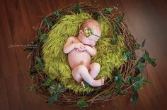 SET Olive Fur and Wood Branch Nest Owl Bird Photography Prop Newborn Baby Photo Prop