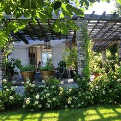 Beautiful pergola with vines.
