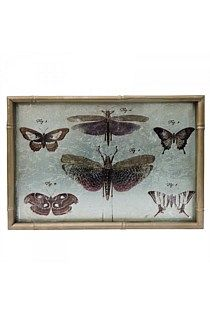 Butterfly Print with Gold Frame