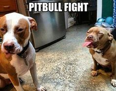 I LOVE PITTIES ... sweet, loving dogs with a heart of gold ... never met a pittie I didn't love ... we have rescued many used for dog fights and each one of these sweet animals wanted to be saved and rehabilitated ... I slept on them as a child ... I trust pitties sooner than people ...  I LOVE PITTIES <3 <3 <3