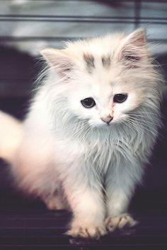 sad sad cat