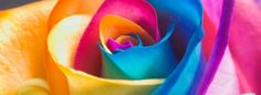 rainbow for facebook | Rainbow Rose Macro facebook timeline cover 849 X 312 Aero/Colorful ...