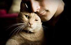 Почему от кошки зависит ваше благополучие