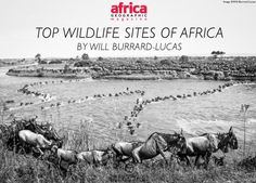 Find out some of Will Burrard-Lucas' favourite places to see wildlife on the continent. Continents, Places To See, Safari, Wildlife, Africa, How To Plan, Travel, Outdoor, Top