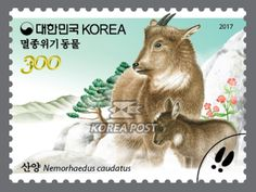 Endangered Wildlife, February 20, 2017, Mother goral and her young one, 멸종 위기 동물, 2017년 2월 20일, 어미산양과 새끼산양