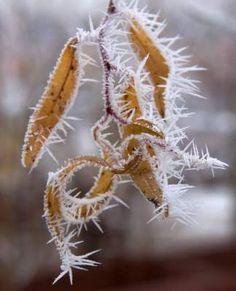 Холодная сказка: невероятно красивая природа, покрытая инеем. Фото