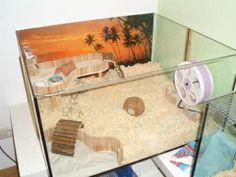 Sammelthread: Aqua / Terra-Woonideeën - Pagina 5 - ARCHIEF - Kooien s Uitrusting - www.the-hamsterforum.de