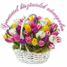Happy Birthday Photos, Name Day, Topiary, Cut Flowers, Flower Arrangements, Origami, Pretty, Frases, Tulips