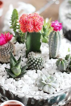 The best tutorials for DIY TERRARIUMS - GET CREATIVE: … DIY TABLETOP CACTUS & SUCCULENT GARDEN / TERRARIUM!