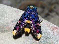 The Big Strange: Moths