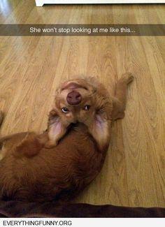 Bat dog lol! My pit does the same!