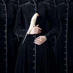 peepingbird:    porJuliette Bates