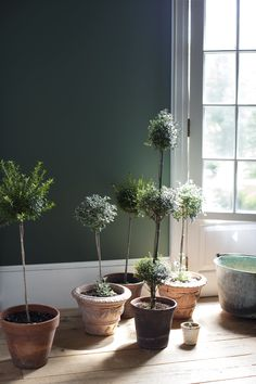 Terre Verte from Benjamin Moore's new line. OB-sessed with this color!