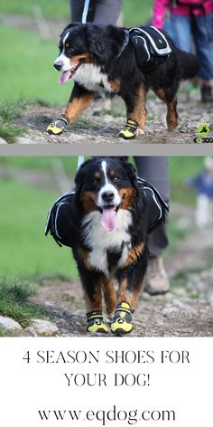 Check out our online shop for more outstanding dog equipment! Walking Equipment, Dog Walking, New Toys, Dog Owners, Your Dog, Lovers, Gift Ideas, Check, Dogs