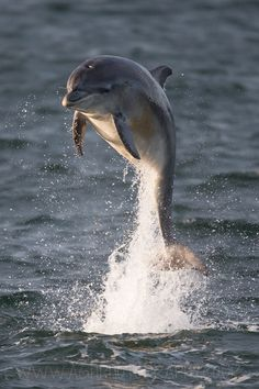 Love the dolphins!